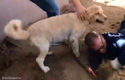 강아지 구조하기 위해 손으로 20분 넘게 흙 파헤친 소방관들