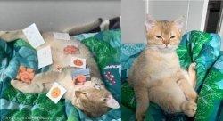 자는 고양이 몸에 스티커 올려본 집사