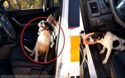 버려진 강아지, 순찰차 뛰어올라 도움 청해