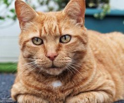 `옛 집사 찾아 64㎞ 달렸다옹`..집고양이의 40일간의 일주