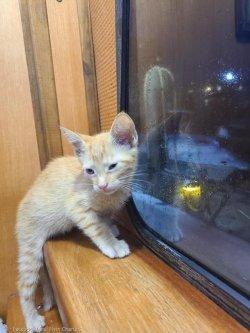 바다에서 월척 대신 고양이 낚았다!