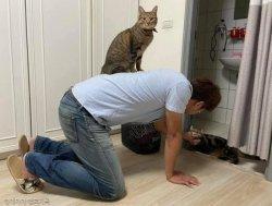 고양이 싫다던 남편의 반전 모습