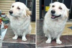주인 출근할 때마다 슬픈 표정 짓는 강아지