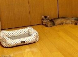 집사 좌절하게 만든 고양이 숨숨집 언박싱