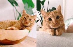 장화 신은 고양이 실사판?