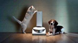 강아지 응가 깔아뭉개지않고 청소하는 로봇청소기 나온다