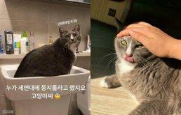 """""""먹고 누워야 제 맛!""""..밥그릇 싹 비운 뒤 고양이가 보인 행동"""
