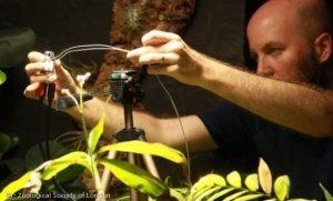셀카 찍는 고사리? 런던동물원의 식물셀카 실험