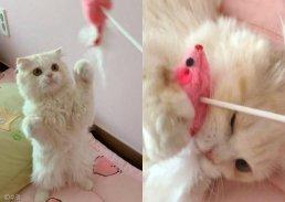 집사랑 놀고 싶은 냥이?… 발 번쩍 들어 매력 어필하는 고양이
