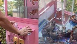 살아있는 게 꽁꽁 묶어 넣은 뽑기 기계 설치한 싱가포르 식당
