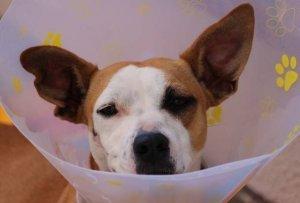 강아지 암 증상 숙지하고 컨디션을 체크해주세요
