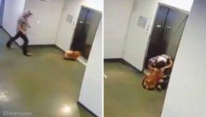 """""""앗, 안돼!"""" 승강기에 목줄 걸린 강아지 구하려 달려간 남성"""