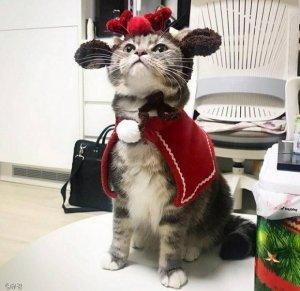 등에 올려놓은 인형 찾느라… 바쁜 고양이
