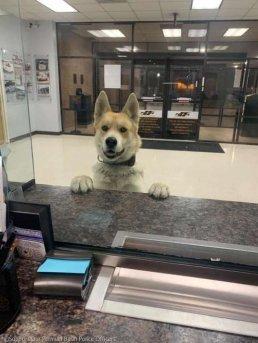 경찰서 들어가 셀프 실종 신고한 강아지