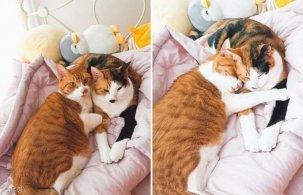 침대 머리를 파이프라고 생각하는 고양이