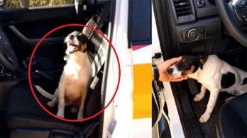 고속도로에 버려진 강아지, 순찰차 뛰어올라 도움 청해