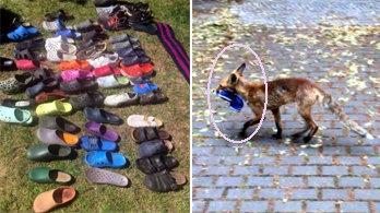 크록스 신발만 100켤레 훔쳐간 도둑… 잡고보니