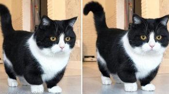 10센티미터 숏다리 덕분에 6만 팔로워 거느린 고양이
