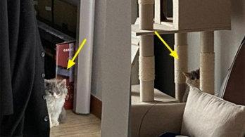집사 출근 막기 위해 가방 지키는 '쪼꼬미' 고양이