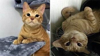 집사가 음식 먹을 때마다 다가와 불쌍한 표정 짓는 고양이