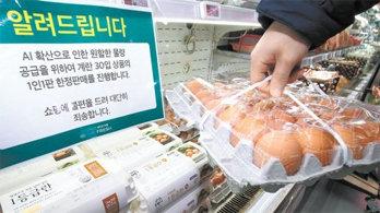 닭 1000만 마리 AI 살처분… 달걀값 46% 쑥