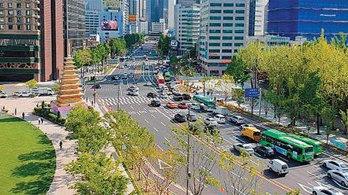 세종대로… 서울역 1.55km, 나무-꽃 가득한 '도심 가로숲' 탈바꿈