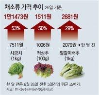 폭염에 밥상물가 급등… 시금치-상추 한달새 50%대 올라