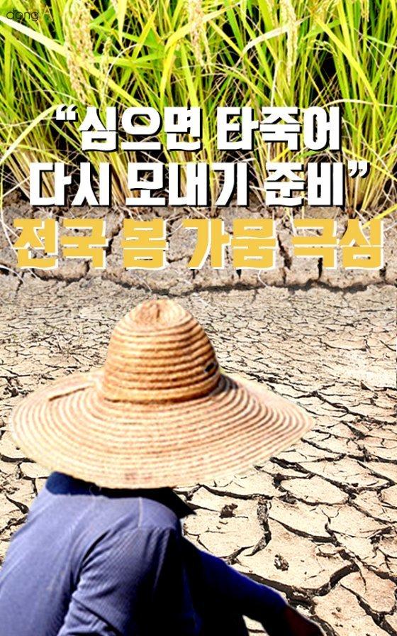 """[카드뉴스]""""심으면 타죽어 다시 모내기 준비"""" 전국 봄 가뭄 극심"""
