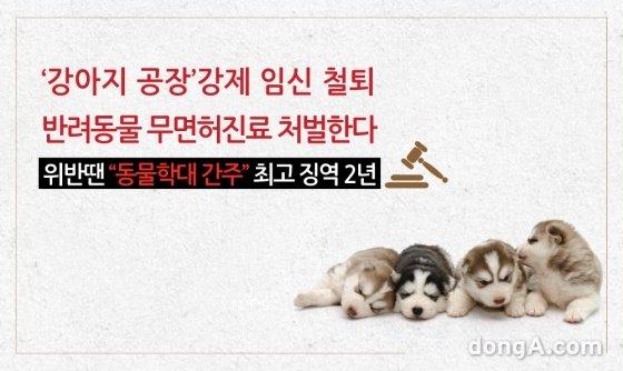 [카드뉴스]'강아지 공장' 강제 임신 철퇴… 반려동물 무면허진료 처벌한다