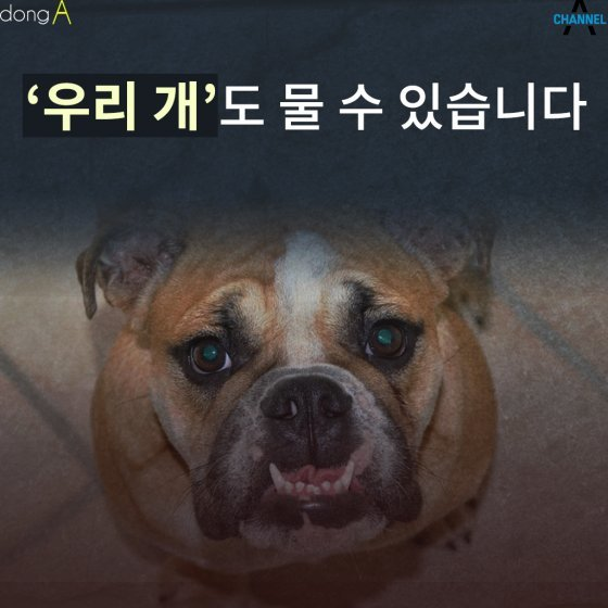 [카드뉴스]'우리 개'도 물 수 있습니다…견주 처벌은?