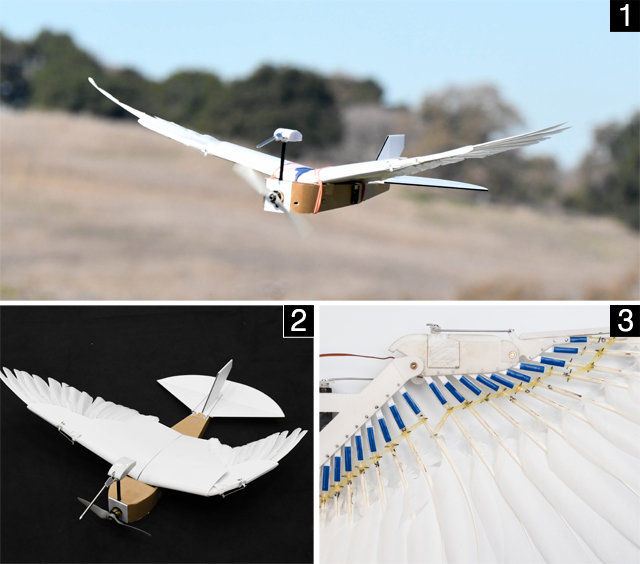 23-비둘기봇640.jpg